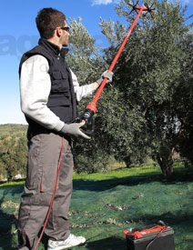 New Power Tool for Olive Growers: Hand-Held Harvester | The