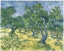 Olive Grove (2)